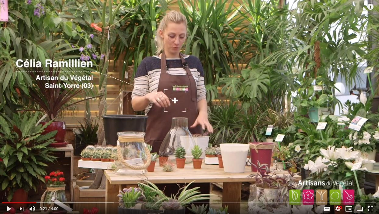 Comment Faire Un Terrarium Plante Grasse comment faire un terrarium : un mini jardin sec de plantes